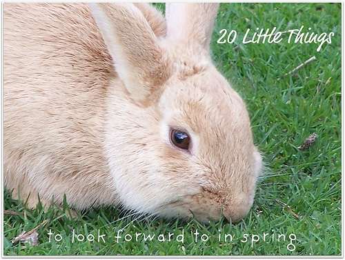 20 Little Things To Look Forward to in Spring