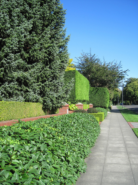 31 Days of Autumn Bliss {Day 17}: <br>Drive By Queen Anne Hill