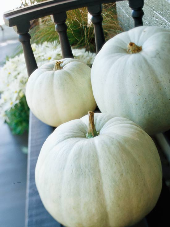 bhg white pumpkins