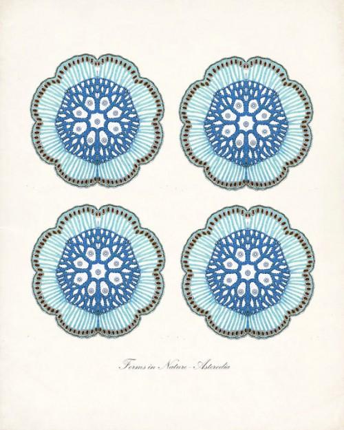 Vintage Sea Life Prints {Etsy to The Rescue!}