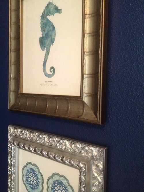 Framed Sea Life Prints