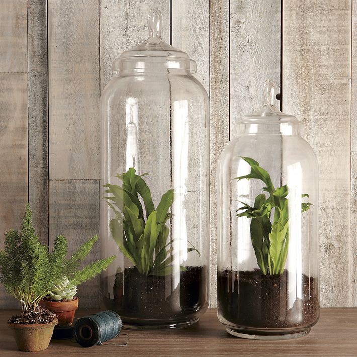 Terrariums {and other Small Space and Urban Gardening Ideas} · West Elm Glass  Jar Terrariums - Plants - The Inspired Room