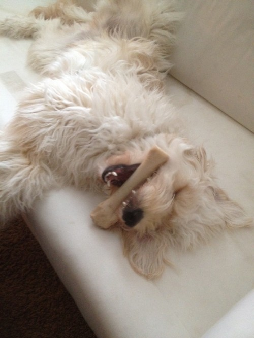 A Day in the Life: {Jack the Goldendoodle at Home}