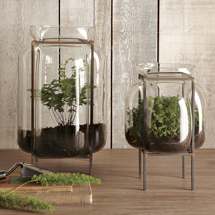 Terrariums and other small space and urban gardening for Plante verte decorative