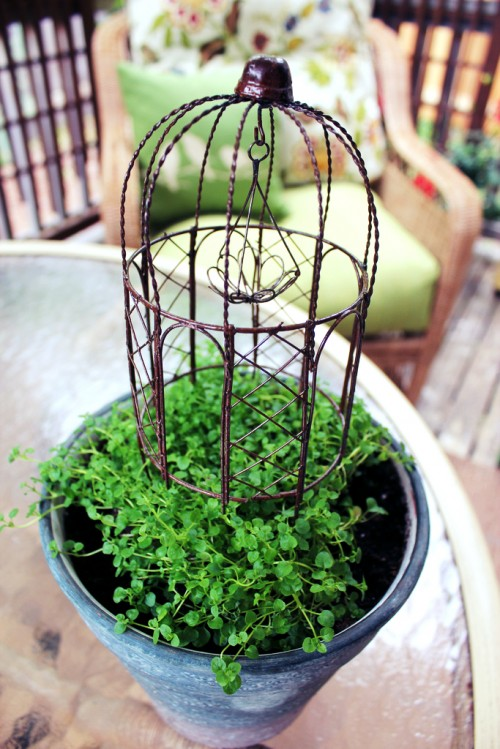 Five 5 Minute Tiny Gardens You Can Make in a Crate Pot or