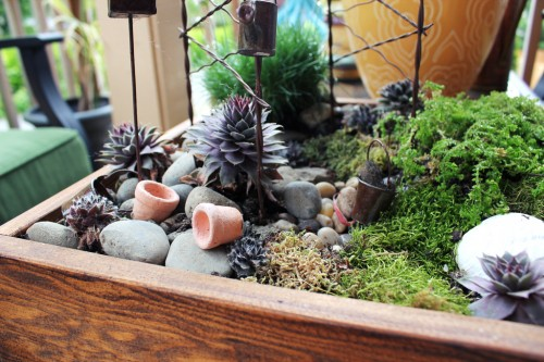 Fairy Garden planted in a Crate