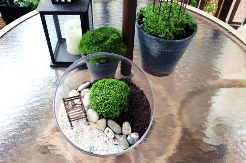 Glass terrarium with plants rocks and small chair