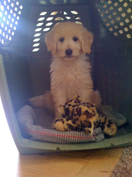 My Crate and My Cheetah