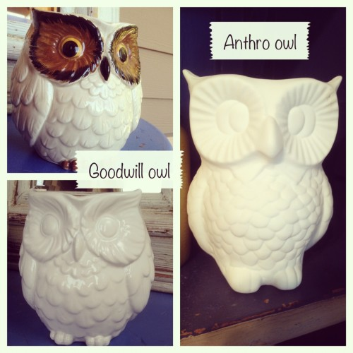 Owl Crisis