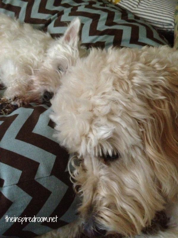 jack resting by winston
