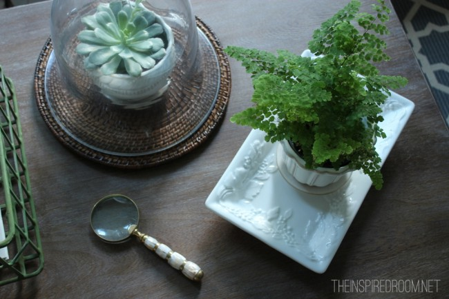 coffee table with succulent and magnifying glass