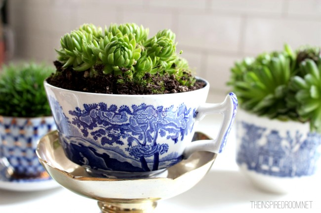 indoor plants teacup garden