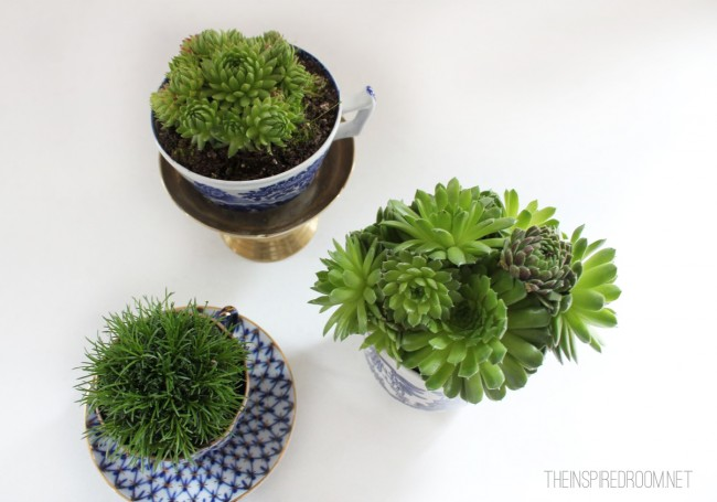 Teacup Gardens {5 Minute Miniature Container Garden}