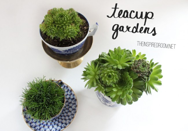 Teacup Gardens {5 Minute Miniature Container Garden} - The ...