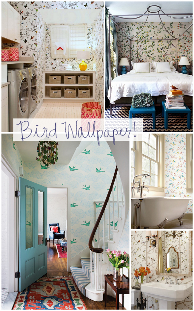 rooms with bird wallpaper