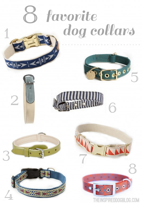 8 Favorite Dog Collars (For the Modern Pup)
