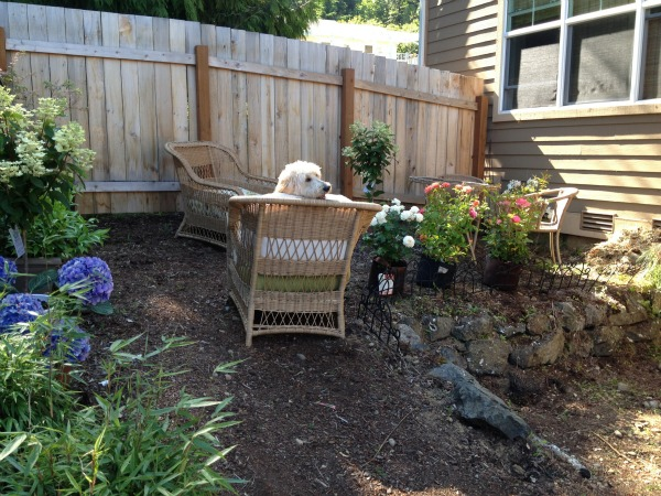 Planting A Backyard Garden the allure of a secret cottage garden - the inspired room