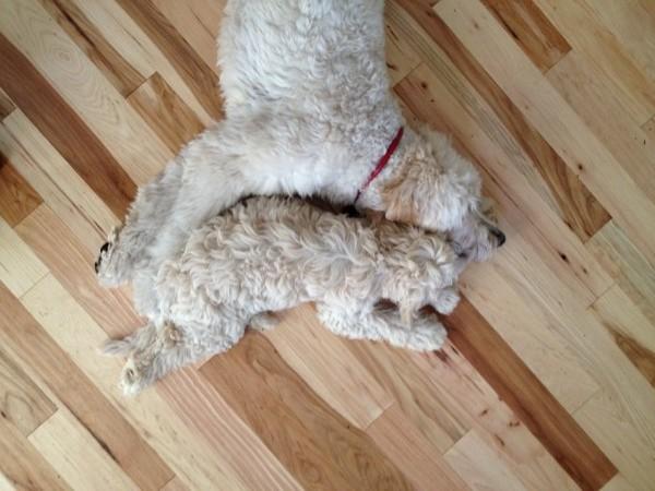 Jack & Lily Nap 3