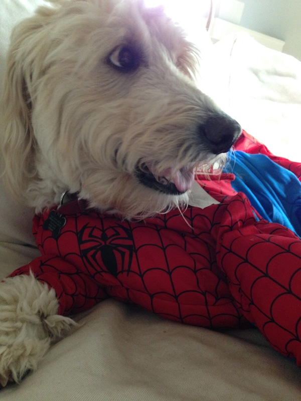 Jack as spiderman