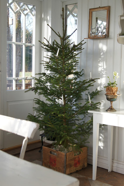 Simple christmas decorating ideas why i decorate early Sample christmas tree decorating ideas