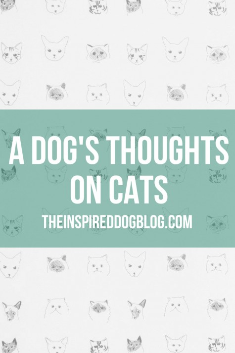 A Dogs Thoughts on Cats by Jack the Inspired Goldendoodle