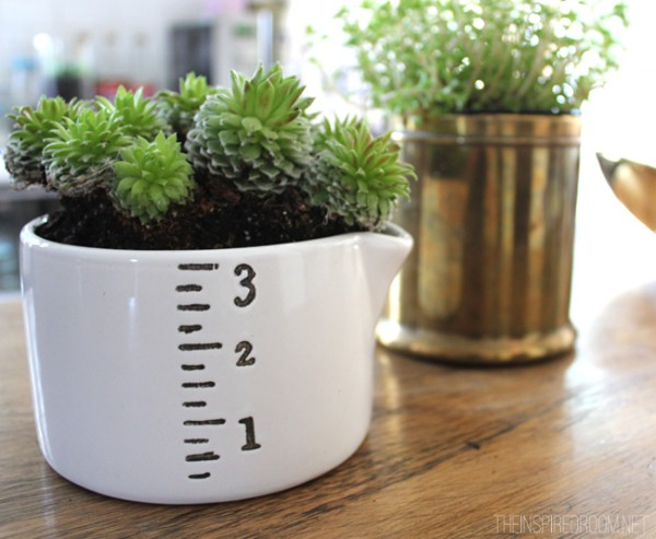Measuring Cup Succulent Gardening