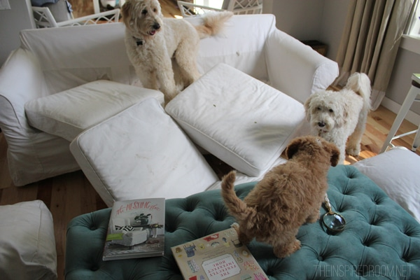 The Truth About White Slipcovers {Part Two: Pet Edition}