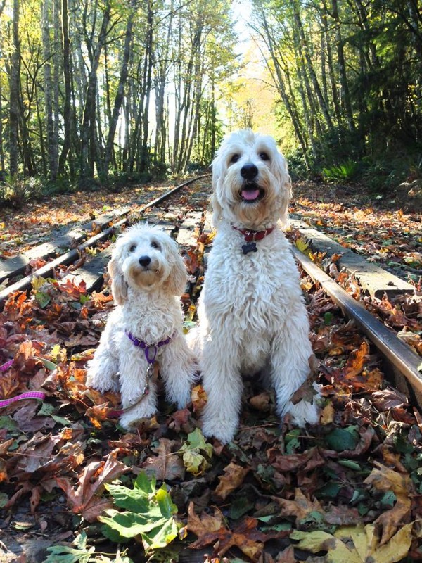 Jack and Lily on an Autumn Walk