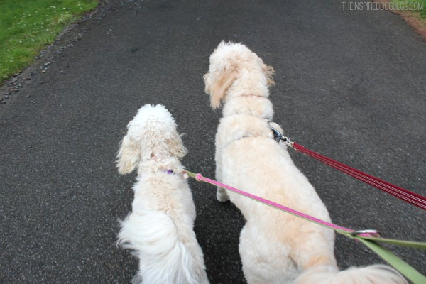 Jack and Lily Walking