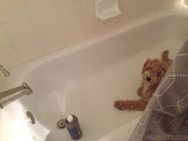 Bella the Australian Labradoodle Bathtub