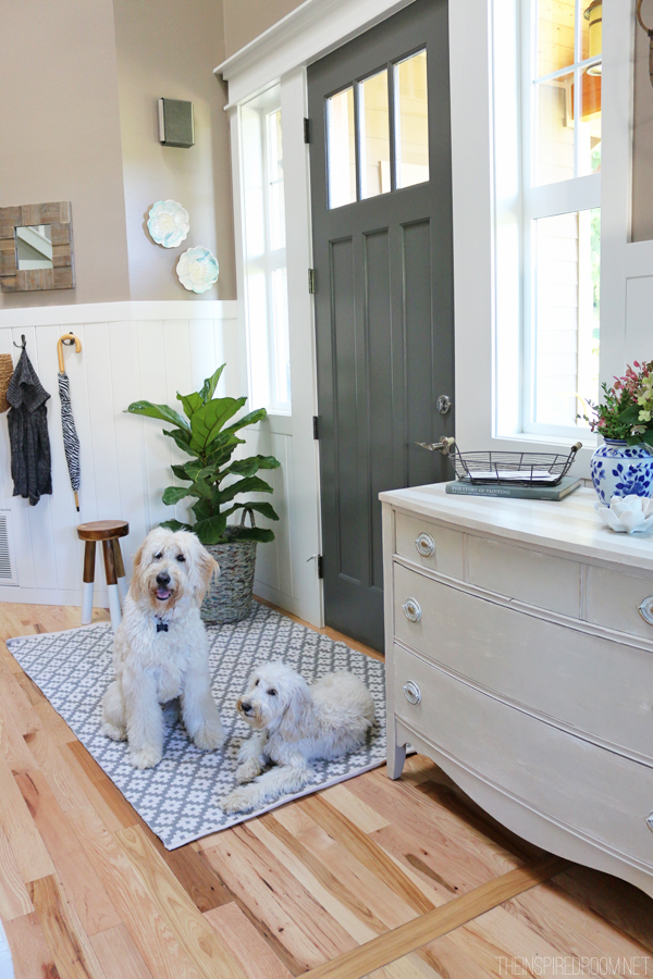 The Inspired Room Entry - Jack the Goldendoodle and Lily the Australian Labradoodle