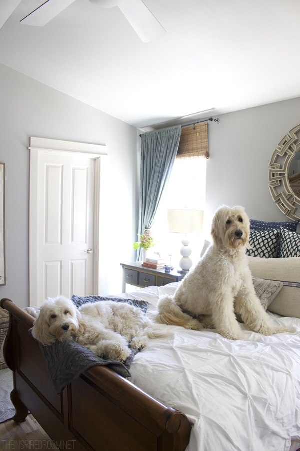 Bedroom - Jack the Goldendoodle and Lily the Australian Labradoodle