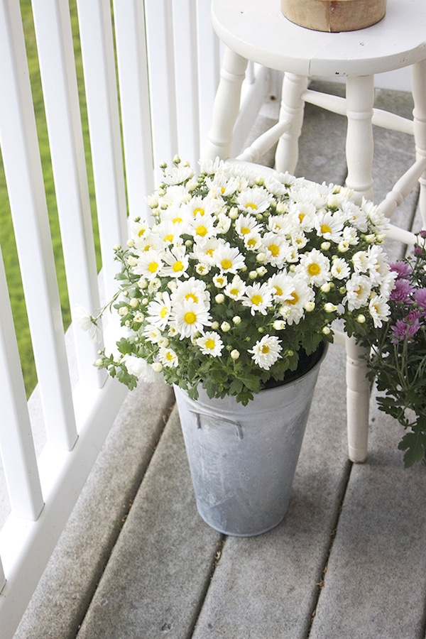 Patio Flowers for Fall - Mums in Galvanized Tin