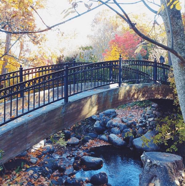Quiet {Day 2: Loving Fall}