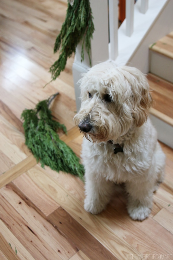 Christmas Unraveling - The Inspired Room - Jack the Goldendoodle