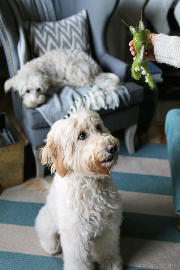Jack the Goldendoodle and Lily the Labradoodle - Dog Shaming
