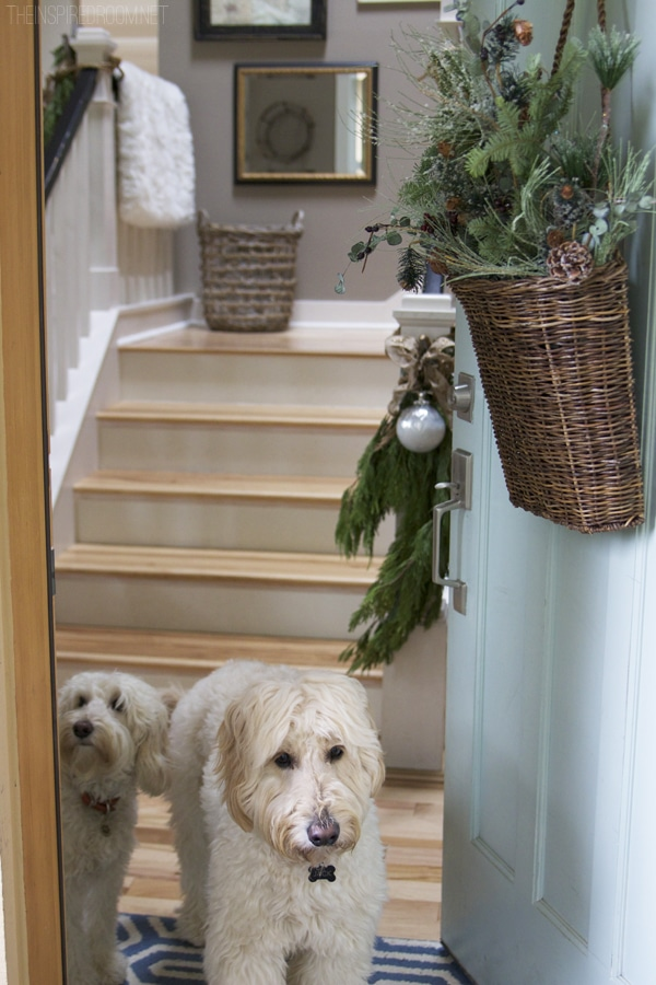 Jack the Goldendoodle and Lily the Labradoodle - The Inspired Room Christmas House Tour