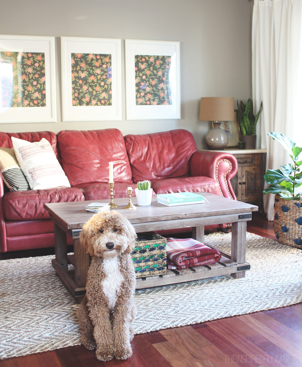 Living Room Decorating with Red Couches - Bella the Labradoodle