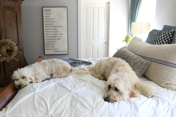 Jack and Lily - Goldendoodle and Labradoodle- The Inspired Room