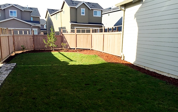 Backyard- before