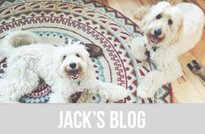 Jack the Inspired Goldendoodle - Inspired Dog Blog
