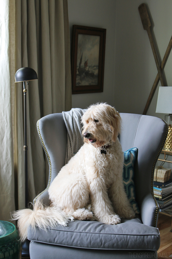 Jack the Goldendoodle - The Inspired Room blog