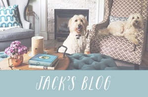 Jack the goldendoodle - dog blog