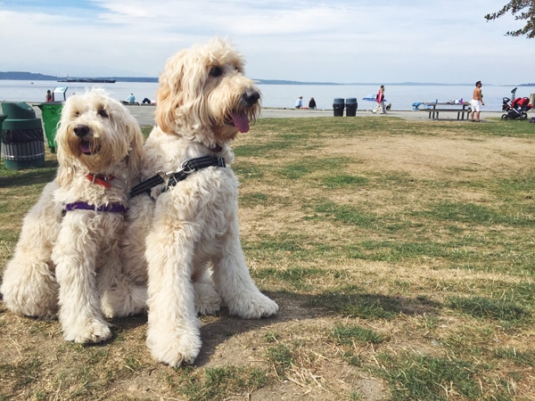 Jack and Lily at the Beach