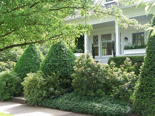 Front Yard shrubs - The Inspired Room