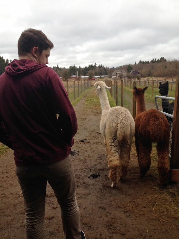 That Time We Almost Bought An Alpaca Farm