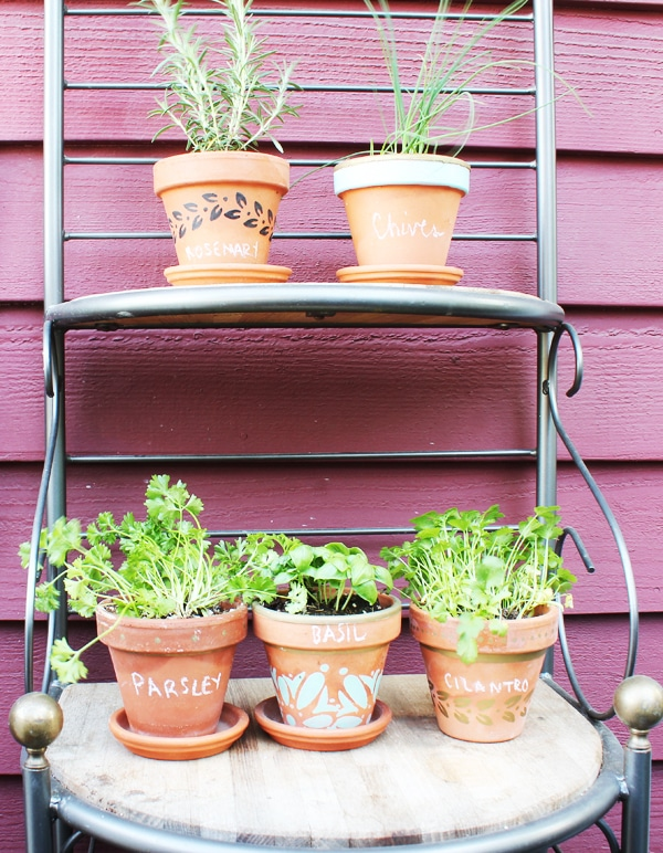Small balcony herb garden