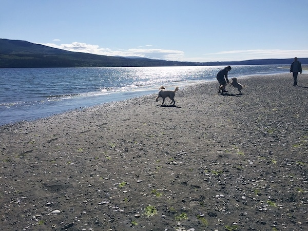 Beach Dogs - Port Townsend