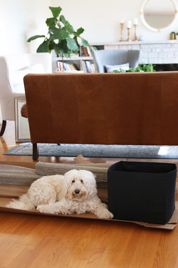 Lily the Labradoodle - The Inspired Room blog