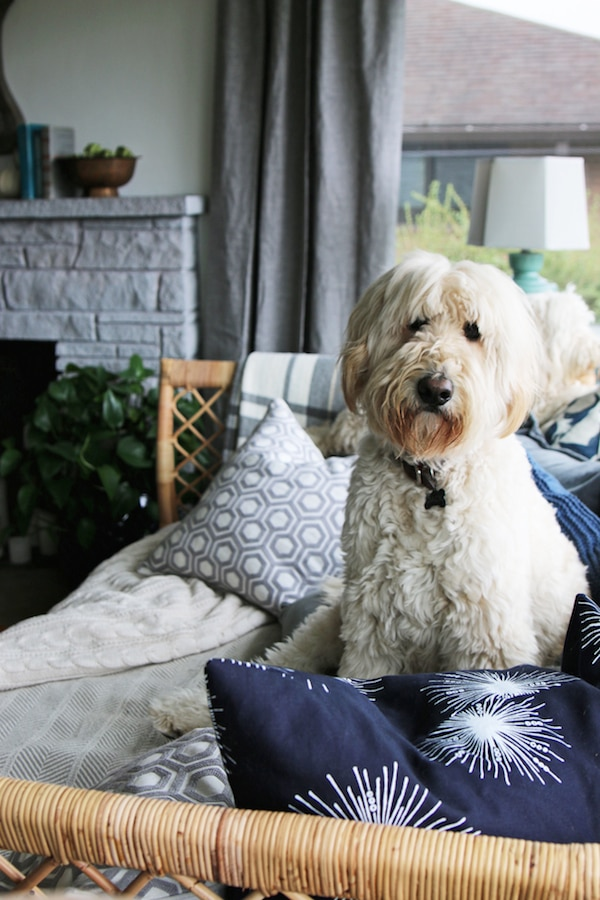 Jack the Goldendoodle / Click through to see a fall house tour of this small white brick cottage with eclectic coastal farmhouse style.